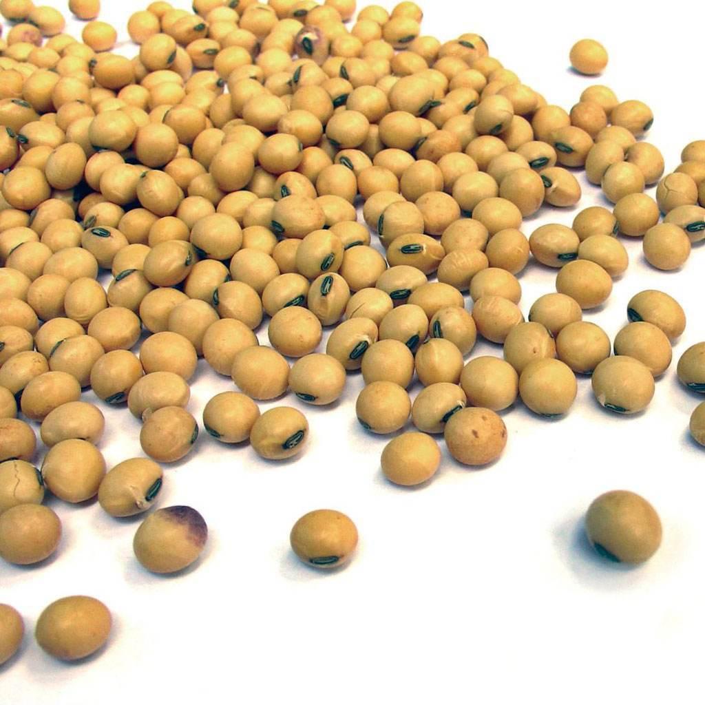soia (www.2e-prod.ro)